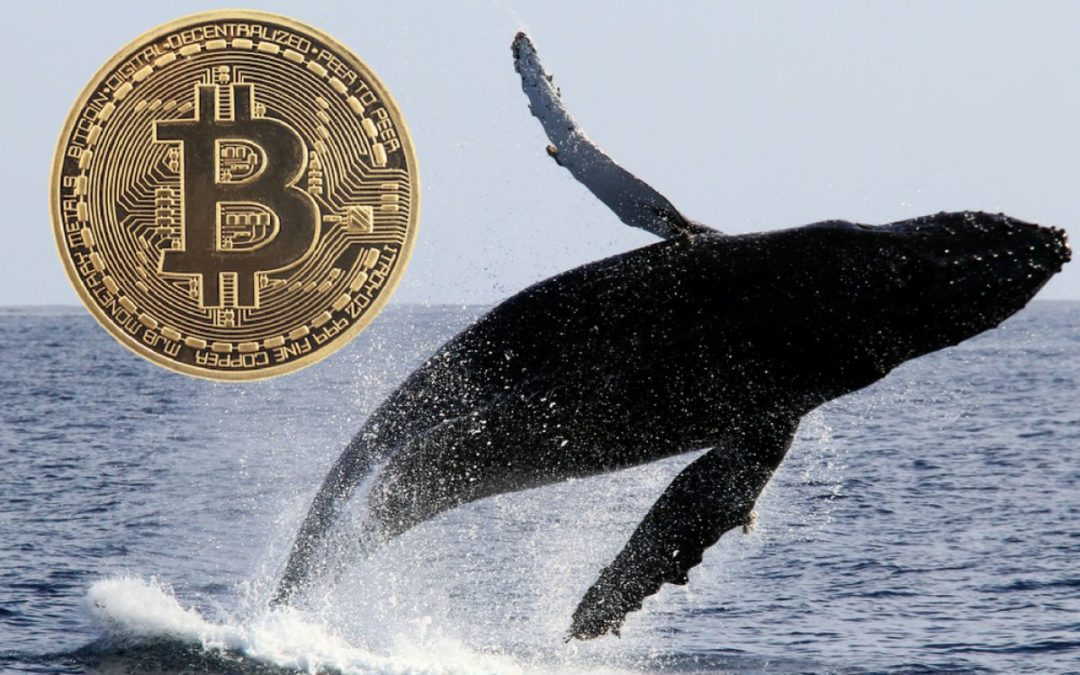 A New Study By Chainalysis Suggests Bitcoin Whales Are Not Responsible For Volatility