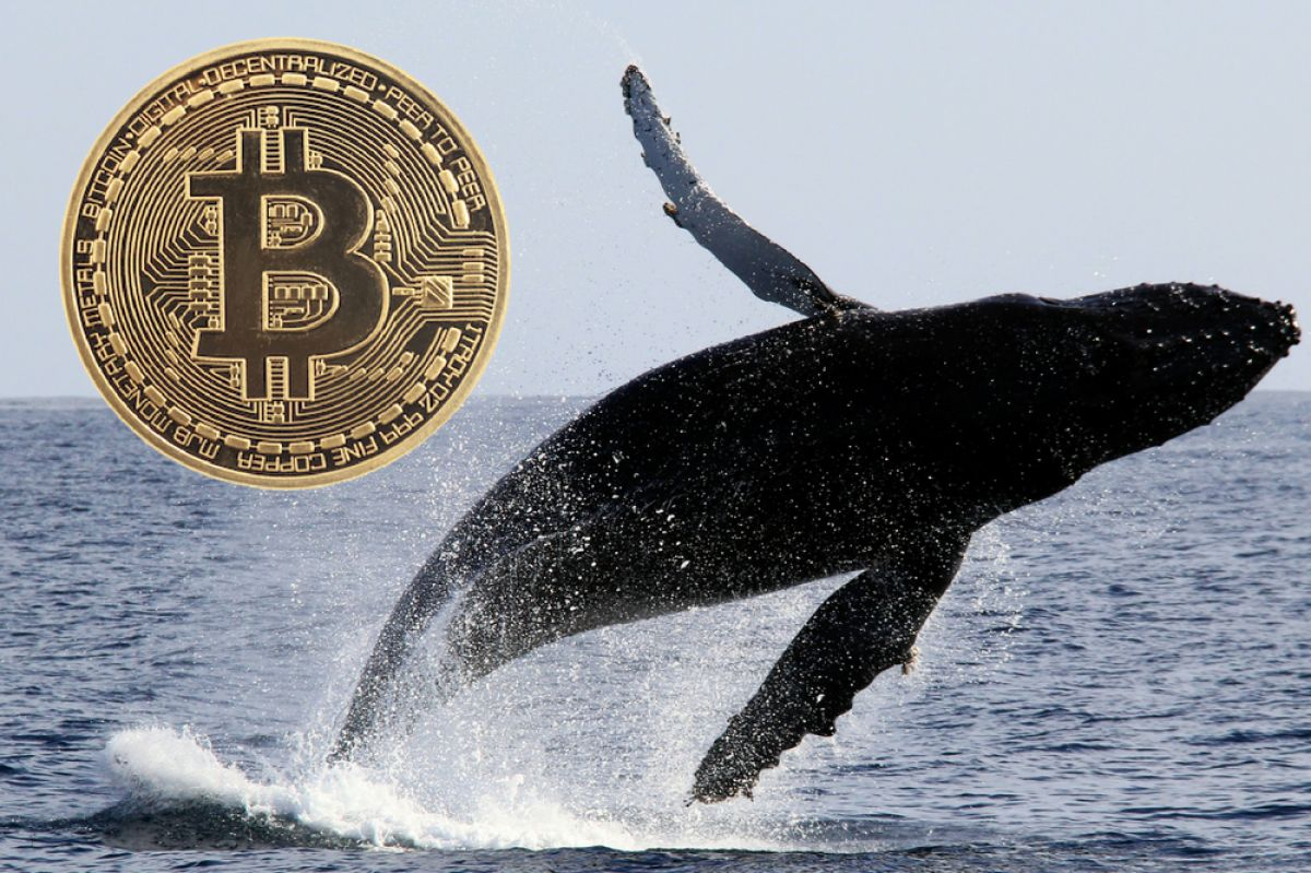 Chainalysis|Bitcoin Whales | Volatility | Research | new Study
