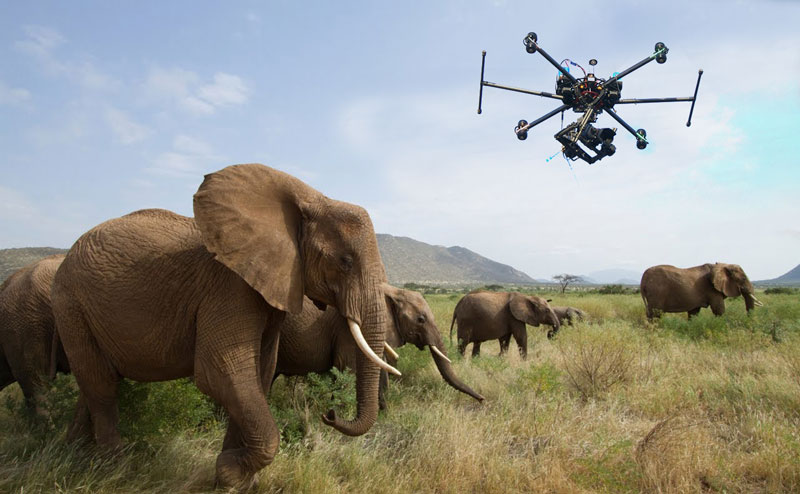 A Poacher Tracking Drone Will Be Introduced By Blockchain Project To Protect Endangered Species