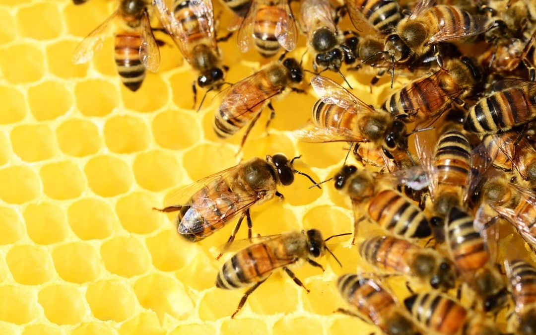 Oracle Partners With World Bee Project To Track Honey Sustainability On Blockchain